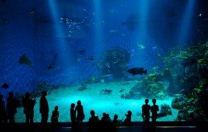 Im sauberen Aquarium fühlen sich Fische wohler und dies wirkt auch auf den Betrachter.